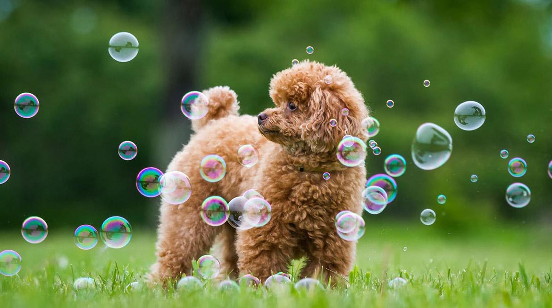 Dog wash a Vedano Olona